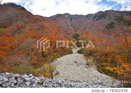 湯檜曽川から見上げた白毛門山に突き上げる銭入れ沢 78302838