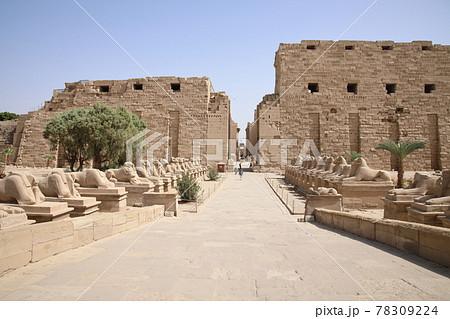 カルナック神殿のスフィンクス(エジプト) 78309224