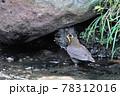 雛に餌を与える親鳥 78312016