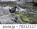 ひな鳥の為にせっせと餌を探す親鳥 78312117