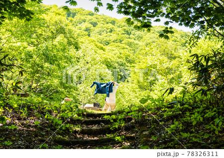 宮城船形山新緑ブナの森に囲まれた休憩所 78326311
