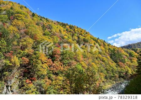 青空バックに見上げるきれいに色づいた山一面の紅葉情景@赤岩青巌峡、北海道 78329318