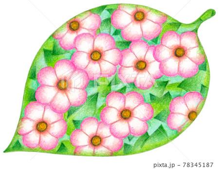 花・葉っぱ 78345187