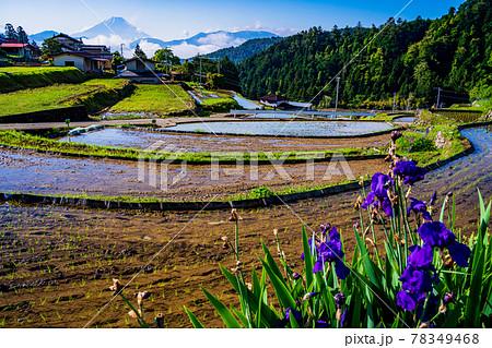 (山梨県)平林の棚田と富士山 78349468