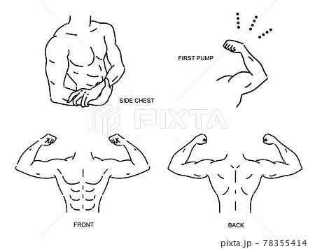 筋肉がある男性の上半身のベクターイラスト セット 78355414