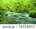 新緑の奥入瀬渓流 78358657