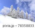 美ヶ原高原の霧氷 78358833
