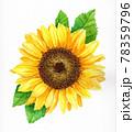 夏のひまわりの水彩画 78359796
