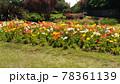 ポピーの黄色と白色とオレンジ色の花 78361139