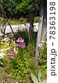 釣り鐘層草とも言うカンパニュラの紫色の花 78363198