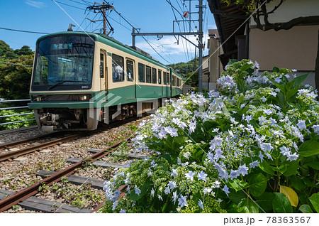 紫陽花が咲く鉄道風景 江ノ電 78363567