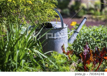 花壇の中に置かれたブリキ製ジョウロ 78364246