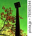 異彩・街路灯と秋のモミジバフウ 78365344