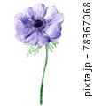 紫のアネモネのイラスト 78367068