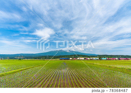 初夏の水田地帯を走る貨物列車と鳥海山 山形県遊佐町 78368487