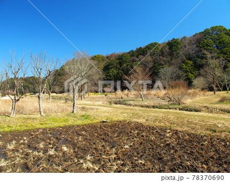早春の耕作された田んぼのある里山風景 78370690