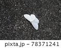 キナミシロヒメシャク 78371241