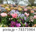 彩り豊かなお花畑 78373964