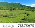 【北海道】盛夏の知床連峰 78375975