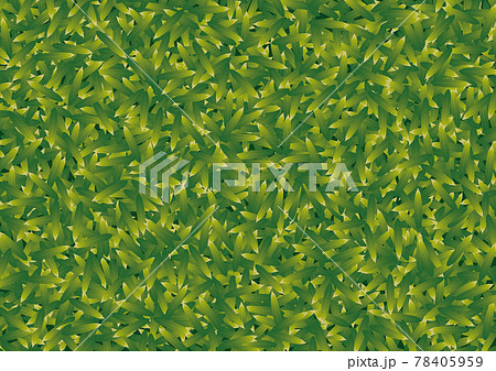 密集した笹の葉のテクスチャ 78405959