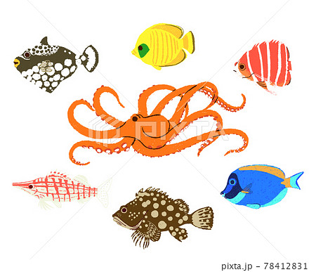 カラフルな海の魚たち2 78412831