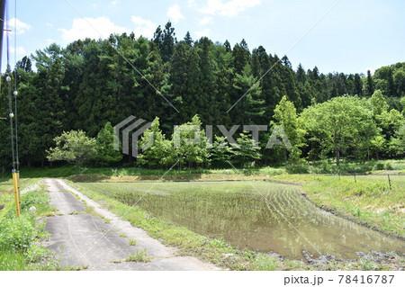 日本 群馬県水上町の初夏の風景 78416787