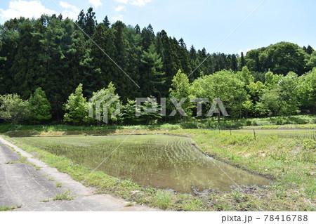 日本 群馬県水上町の初夏の風景 78416788
