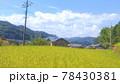 一面に広がる黄緑色の田んぼと空の風景 78430381