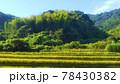 木の生い茂る山と田んぼの風景 78430382