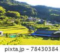 山に囲まれた黄緑色の田んぼの風景 78430384