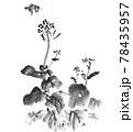 菜の花とミツバチ 78435957