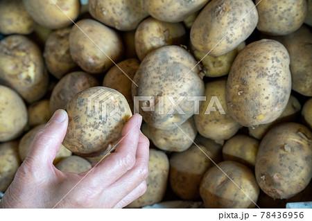 たくさんのジャガイモの中から選ぶ人(皮付き生) 78436956