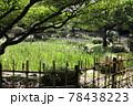 鶴舞公園 菖蒲池 78438223