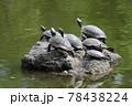 鶴舞公園 亀の甲羅干し 78438224