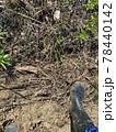 畑で農作業をするイメージ素材 78440142