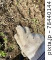 畑でくっつき虫(センダングサ)が軍手に付いたイメージ素材 78440144