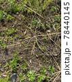 荒れた畑に背の高い草や雑草が繁殖しているイメージ素材 78440145