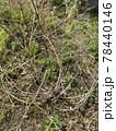 耕作放棄地の畑に背の高い草や雑草が繁殖しているイメージ素材 78440146