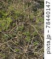 耕作放棄地の畑に背の高い草や雑草が繁殖しているイメージ素材 78440147