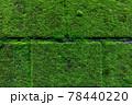 石壁の日陰の部分を覆う濃い緑色の苔、背景素材 78440220