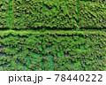 石壁の日陰の部分を覆う濃い緑色の苔、背景素材 78440222