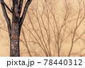 落葉した冬の街路樹の立木と薄茶色の壁に落ちる枝の影 78440312