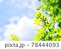 新緑の葉と青空 78444093