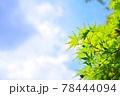 新緑の葉と青空 78444094