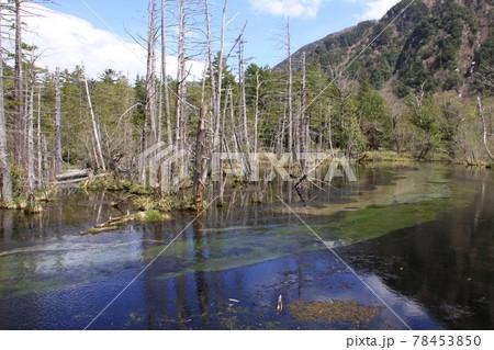 岳沢湿原 撮影場所:岳沢湿原(長野県、上高地) 78453850
