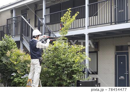 脚立にのって庭木の枝切りをする造園業の作業員 78454477