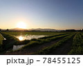 田植え後の水田 6月 秋田県 田園風景 78455125