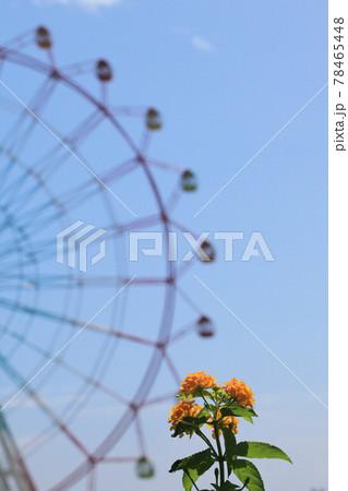 ランタナの黄色い花と観覧車と青空 78465448