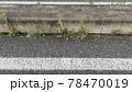 道路脇の隅に溜まった土から生える雑草とポイ捨てされたタバコの吸い殻 78470019