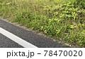 アスファルトの道路脇の雑草 78470020